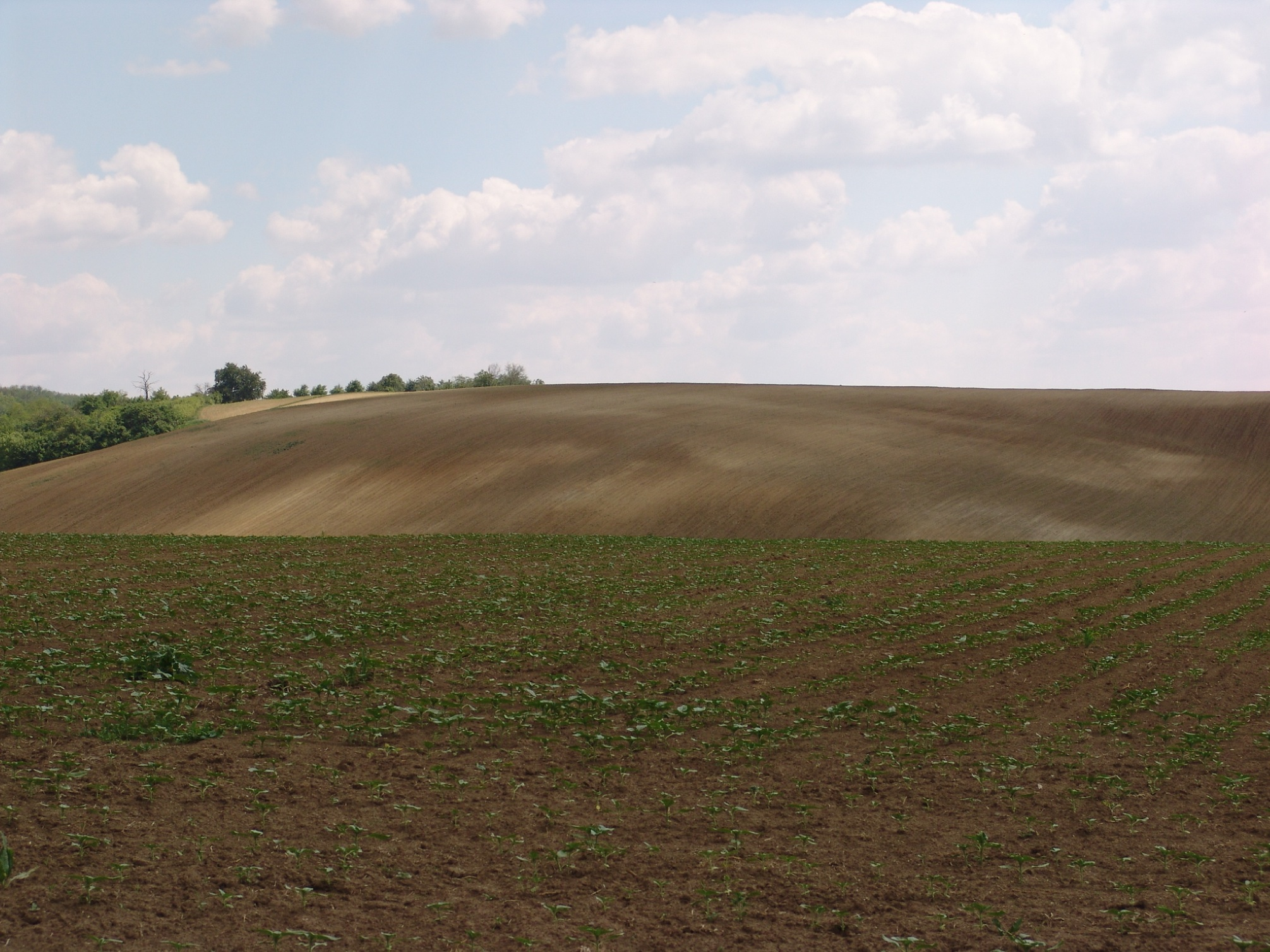 Soil degradation: bare surface caused by intensive cultivation at Martonfa, Southern Baranya Hills. photo by Gábor Varga